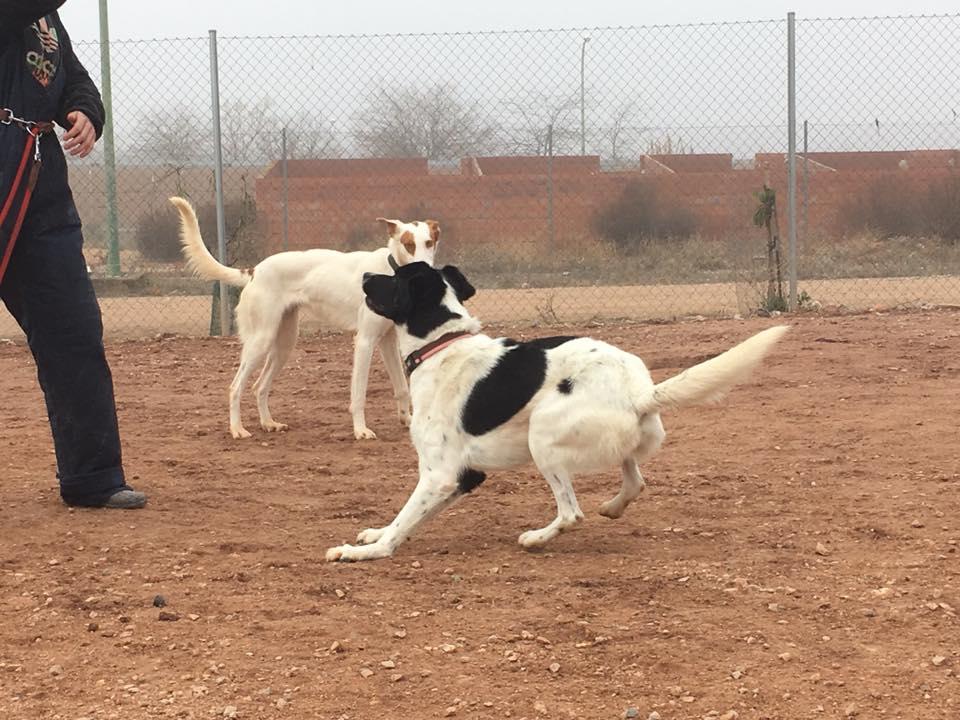 baby perros en adopción