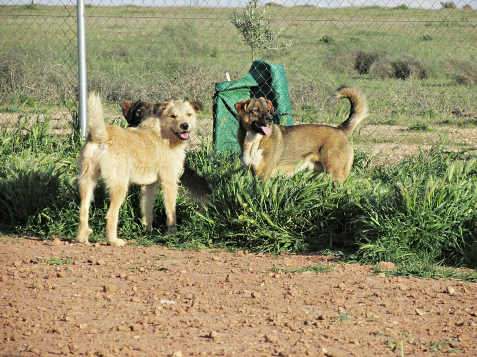 Drago perros en adopción
