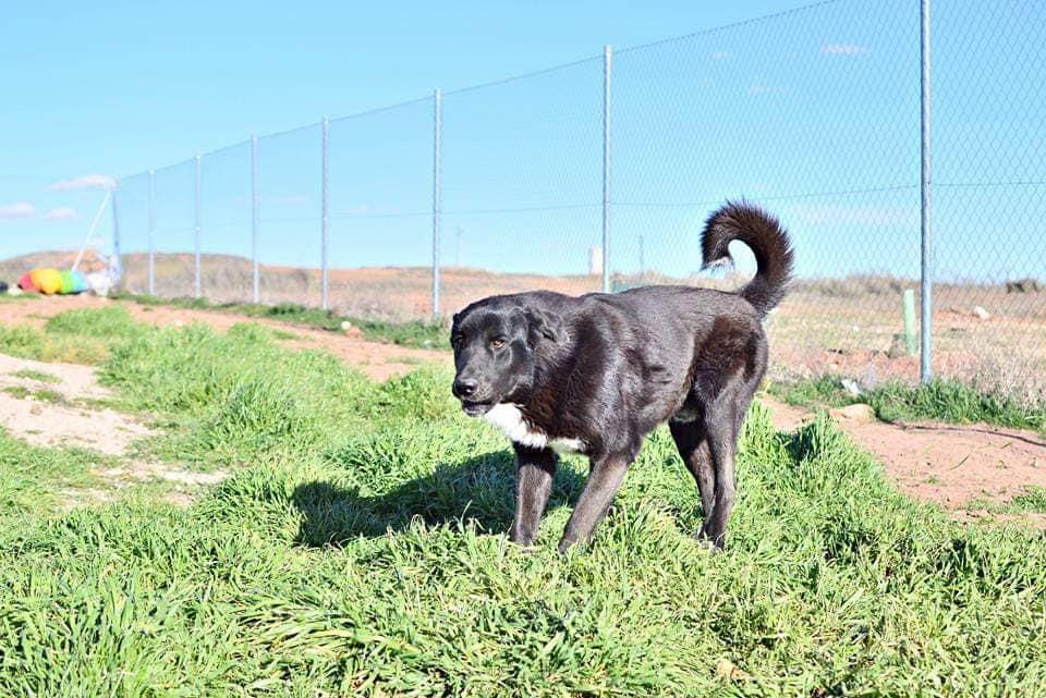 Kichy perros en adopción