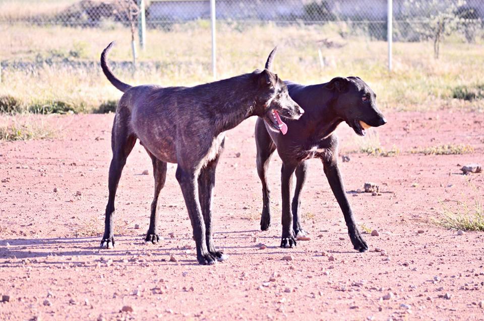 Opi y Atila