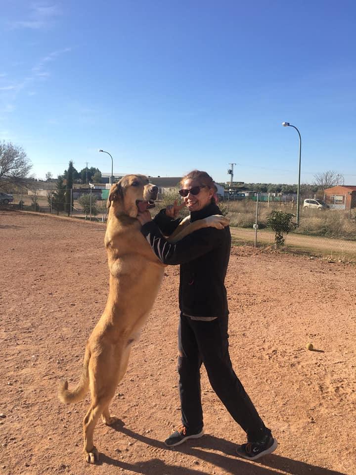 Tadmur perros en adopción