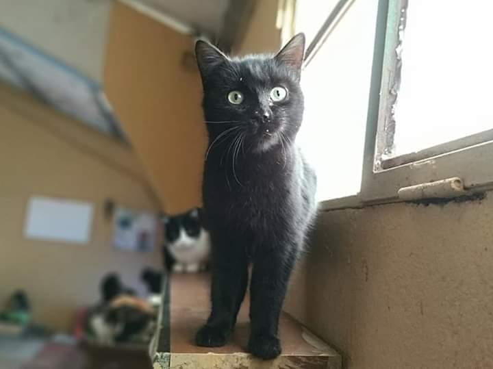 Menta gato en adopcion