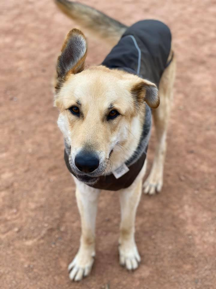 Kai perros en adopción