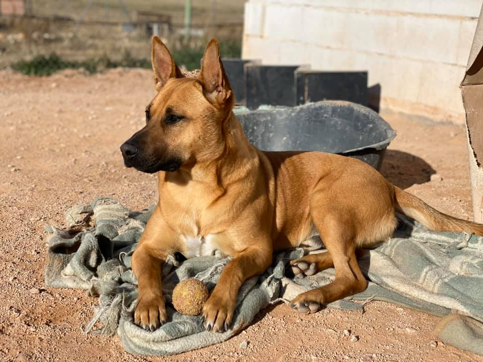 Rocky perros en adopción