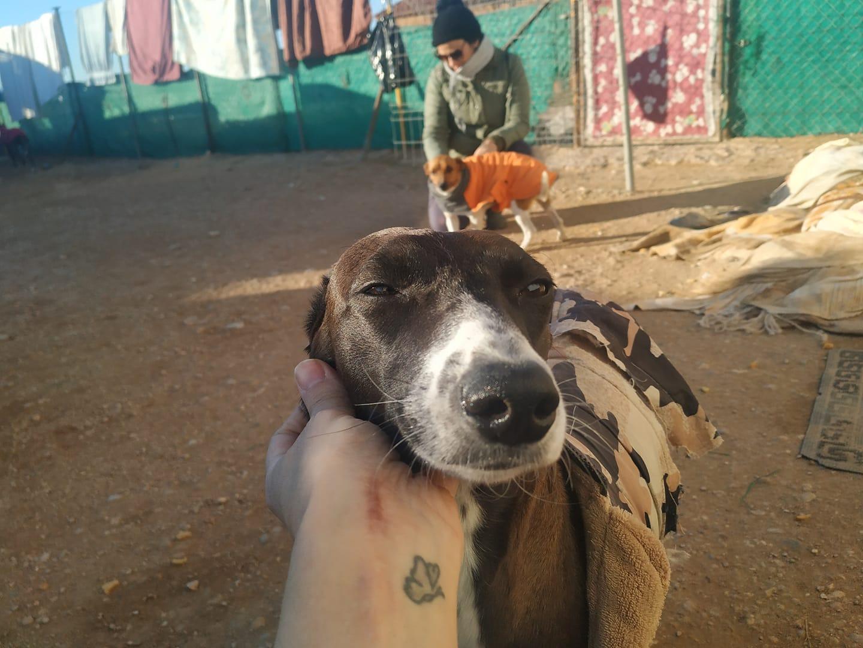 Satya perros en adopción