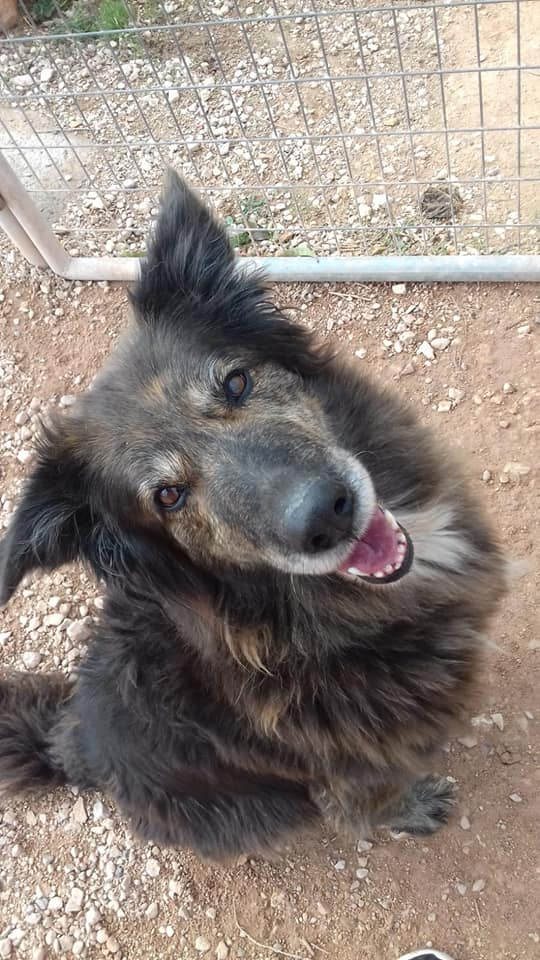Dana perros en adopción
